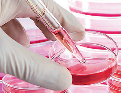 Scientists grow cartilage from stem cells