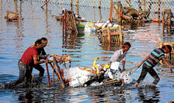 Immersion of idols adds to the pollution in Yamuna.