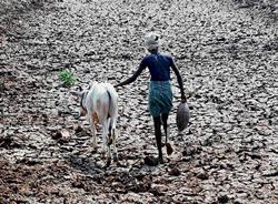 M'rashtra drought was man-made