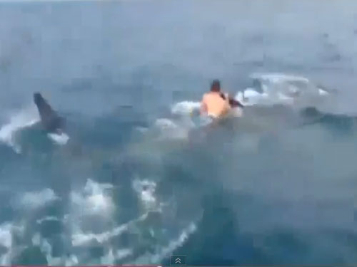 US teen hitches ride on 30 foot shark