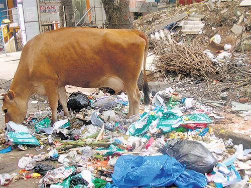 Grazing on garbage
