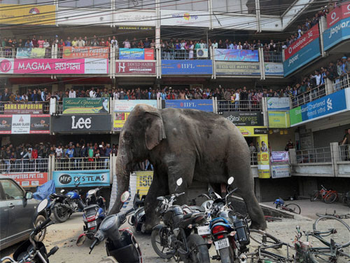 Elephant goes on a rampage in Siliguri town for 7-hours
