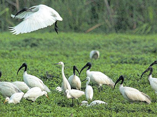Sewage from treatment plant threatens Puttenahalli lake