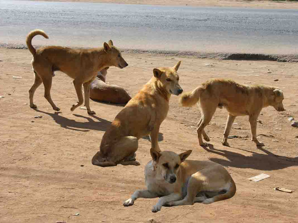 Dogs eat up old woman, who went missing from MP hospital