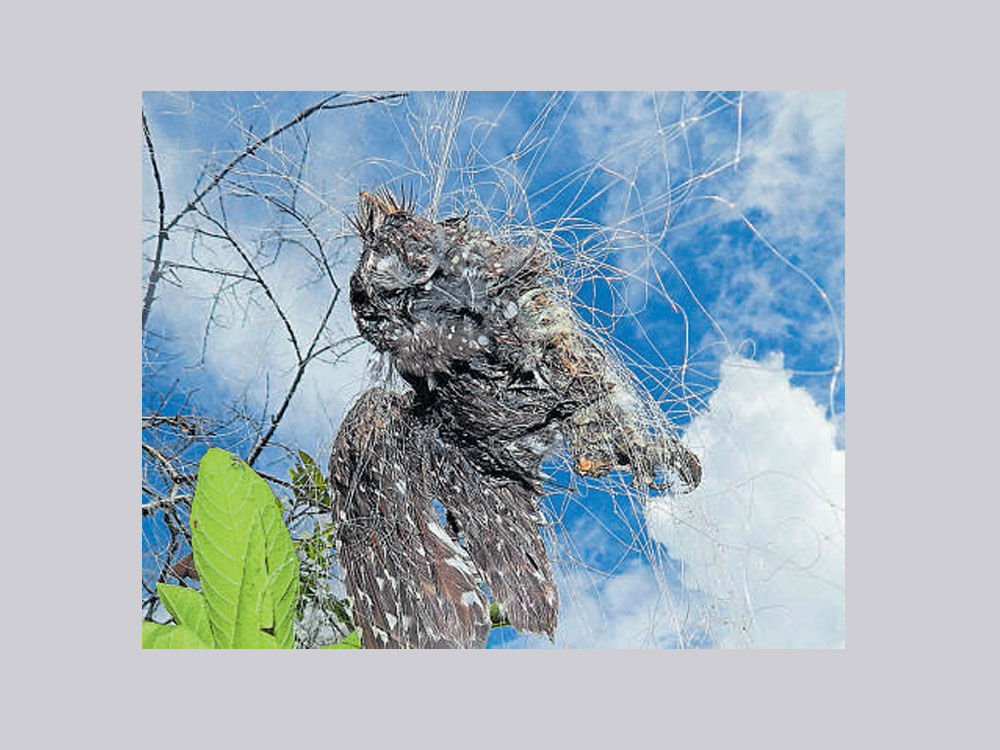 Nets spread to ward off birds cut short their flight