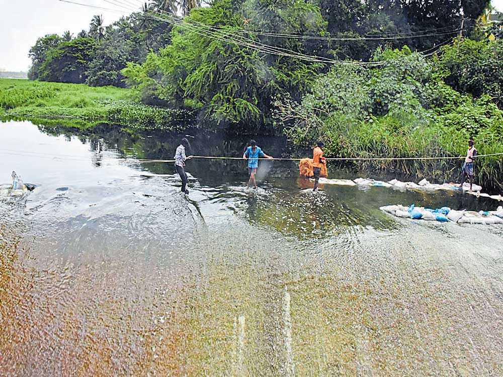 Central panel unhappy with pace of Bellandur restoration