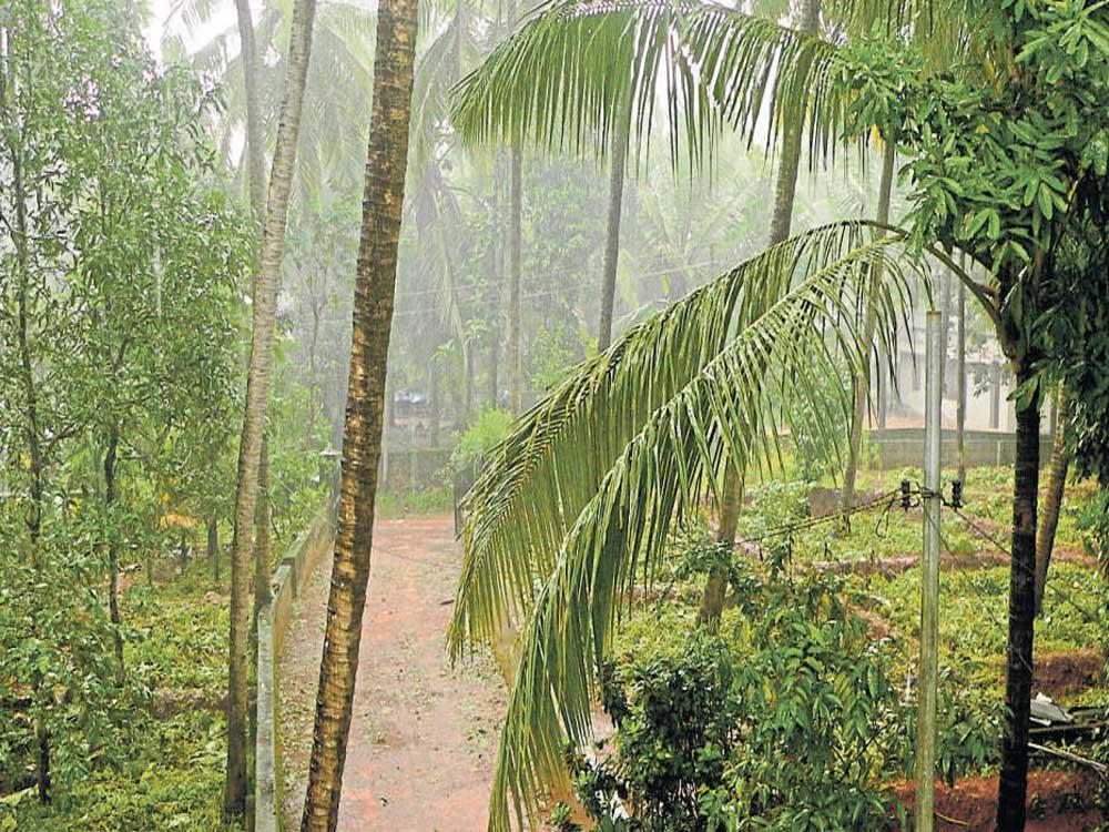 Monsoon making steady advance, expect a 'good week' ahead: IMD