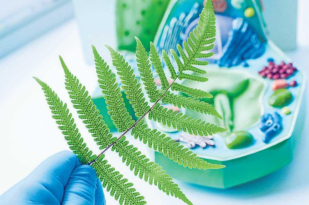 Mimicking photosynthesis