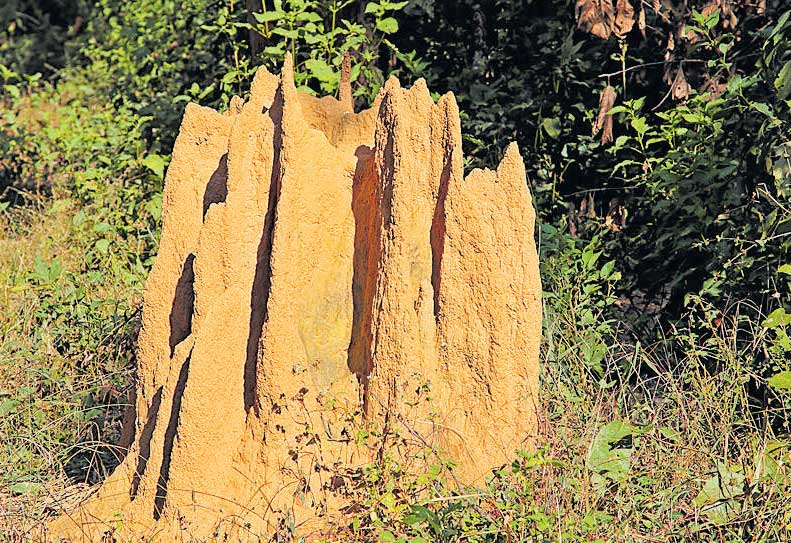 Termites, the indicators of an ecosystem