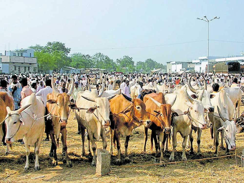 Stance on cattle trade for slaughter after court verdict says TN CM