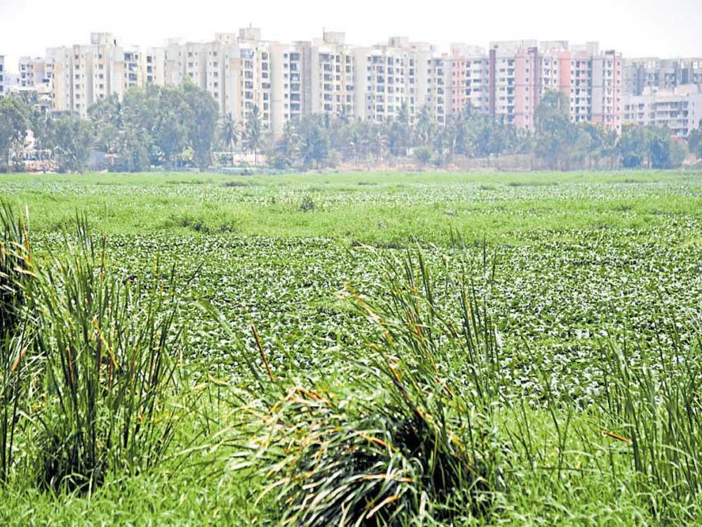 Apartments near Bellandur lake to get closure notices