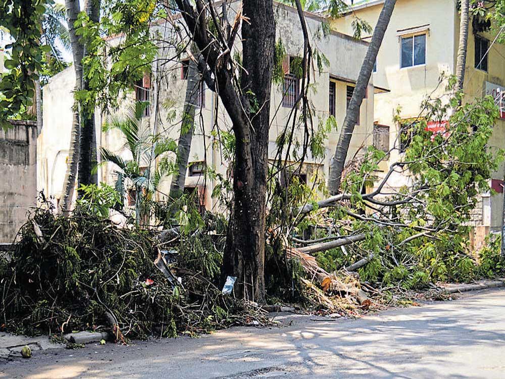 20 kids injured as tree got uprooted during morning prayers