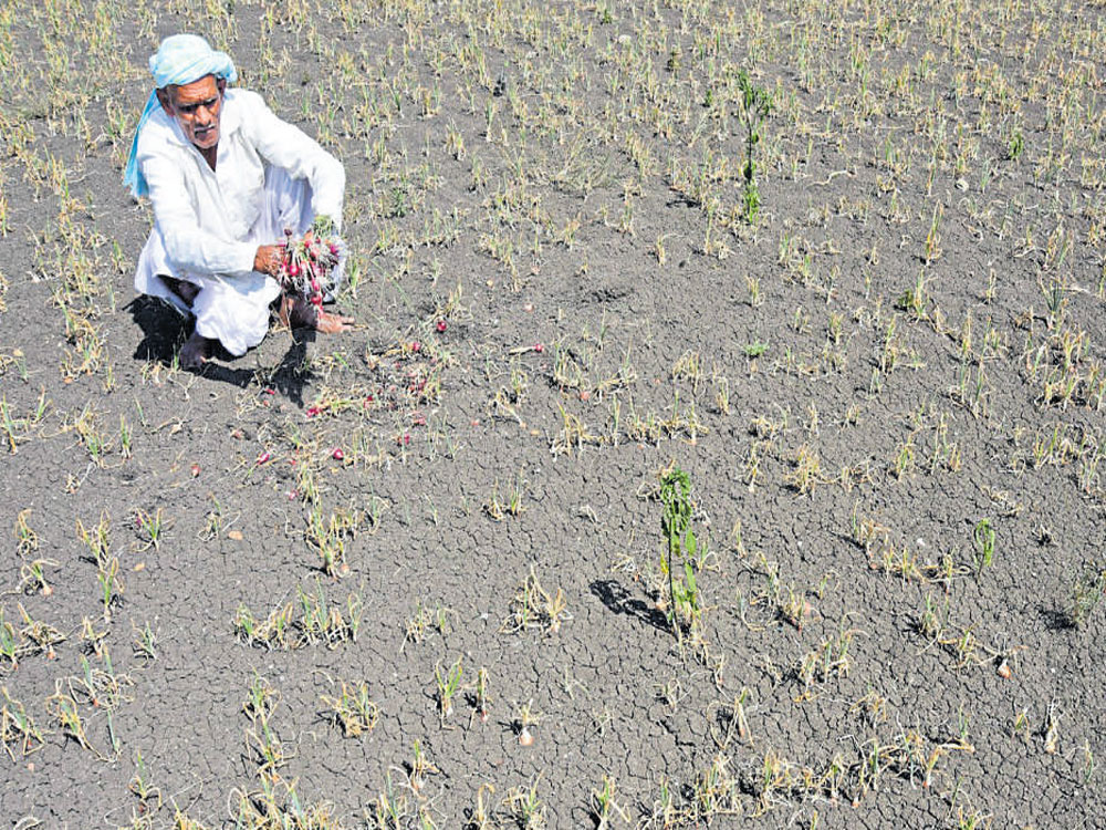 Centre allocates Rs 795 crore drought assistance to Karnataka