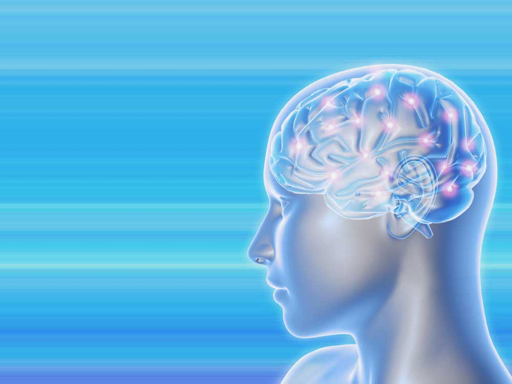 Human brainpower not as exceptional as thought: study