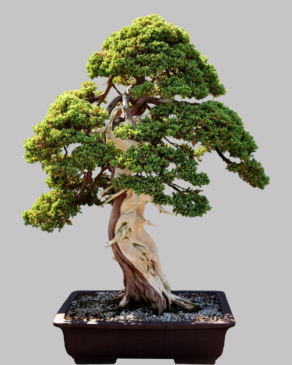 Bonsai: Investments for life