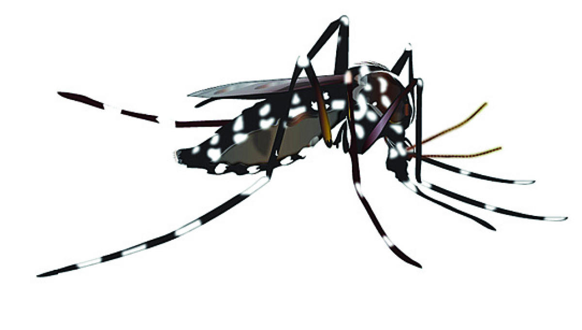 HC seeks report on Dengue from Bengal govt
