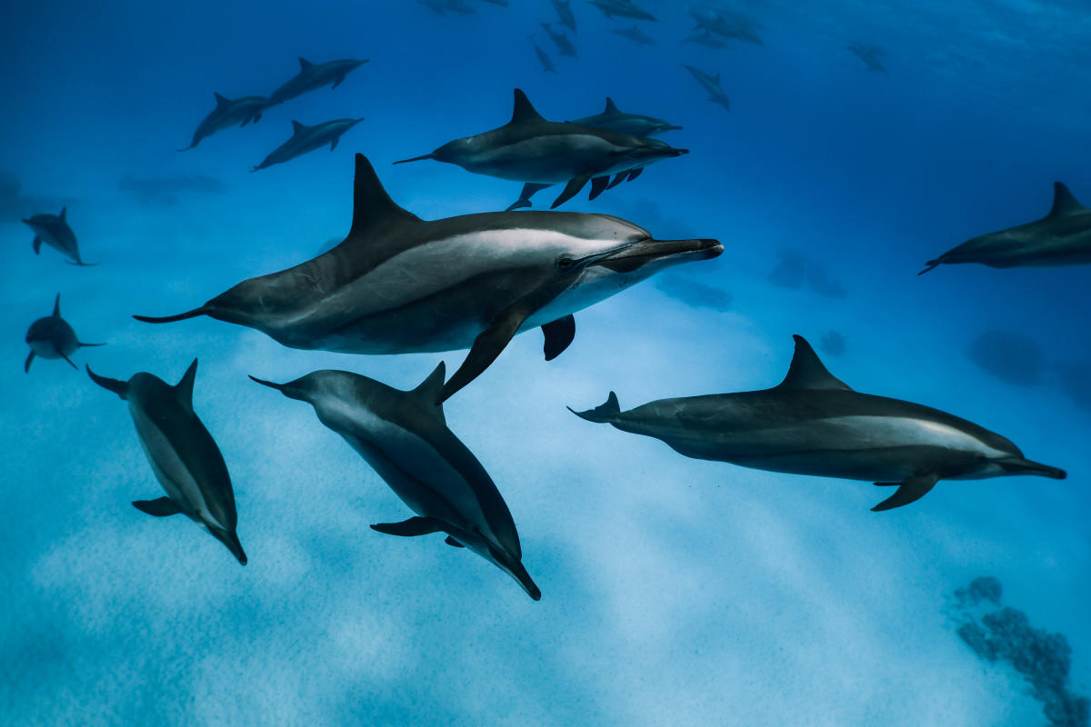 A day with dolphins