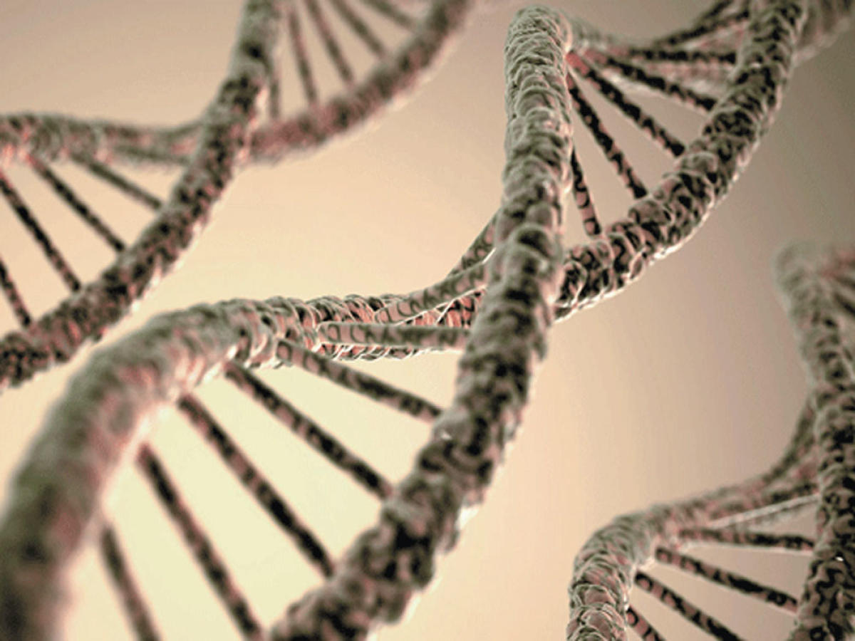 Four genes linked to pancreatic cancer identified