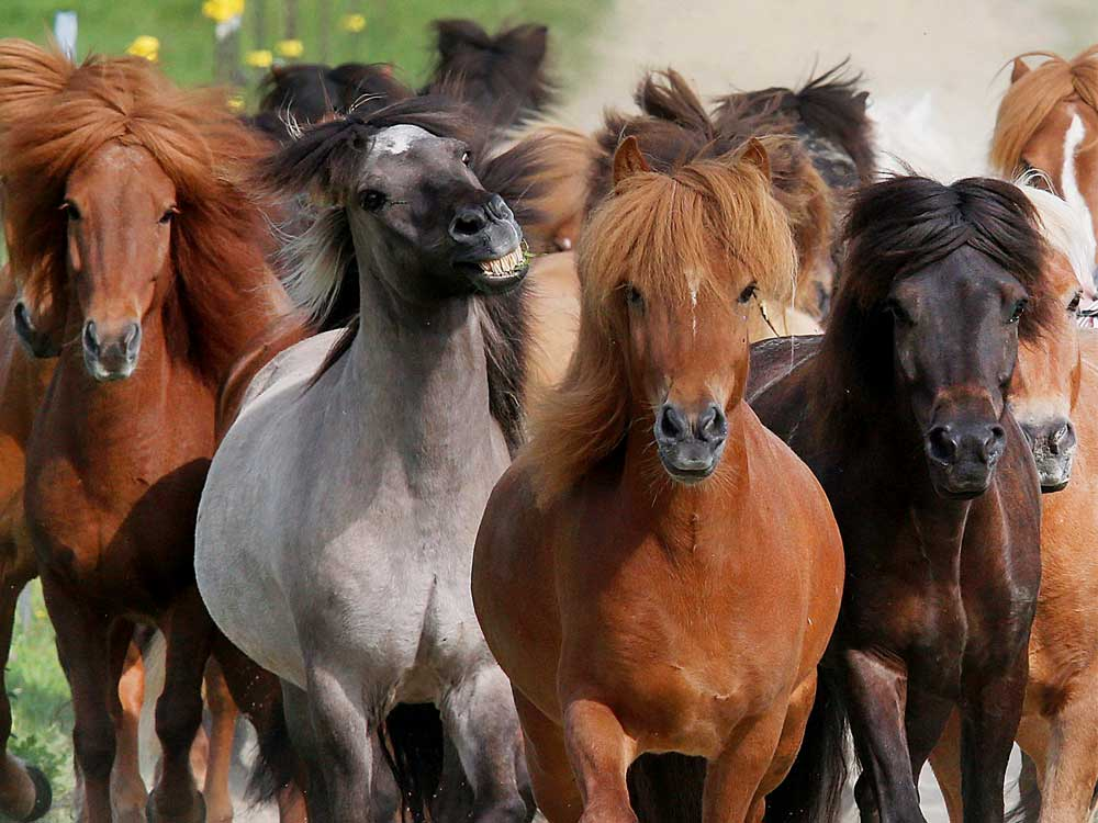 Horses can read human body language: study
