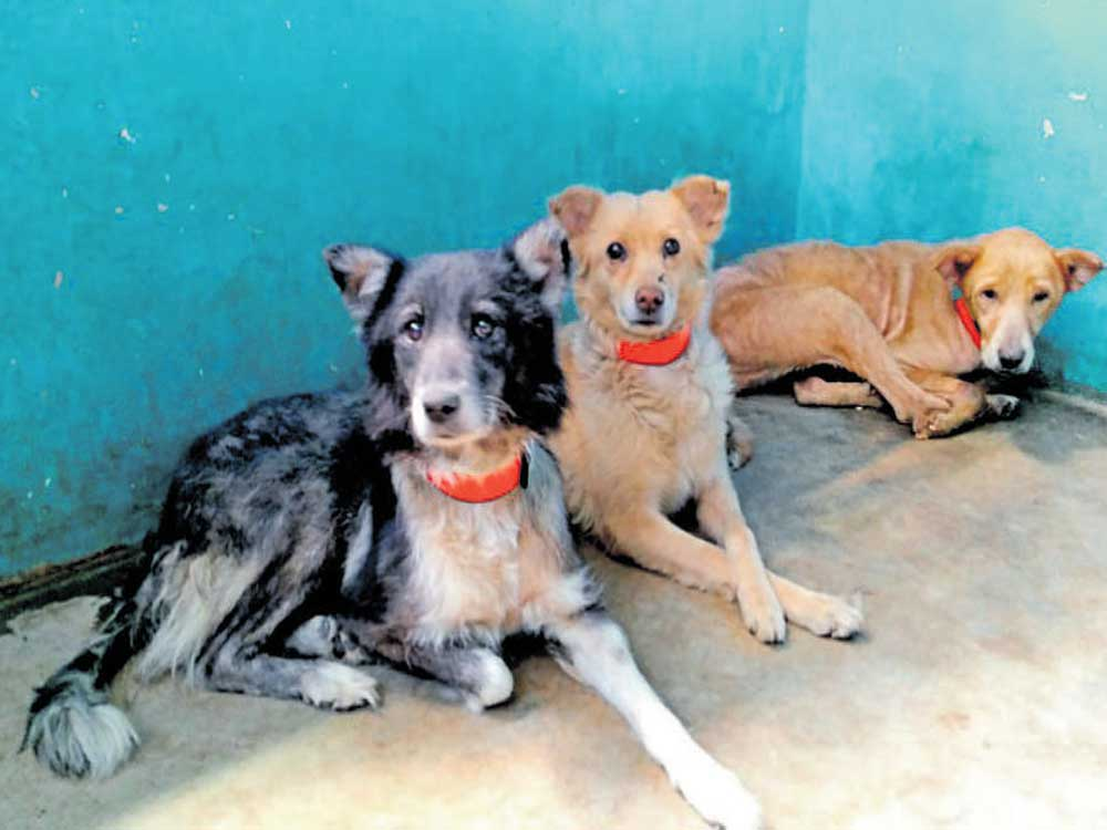 Dogs are colour blind: study