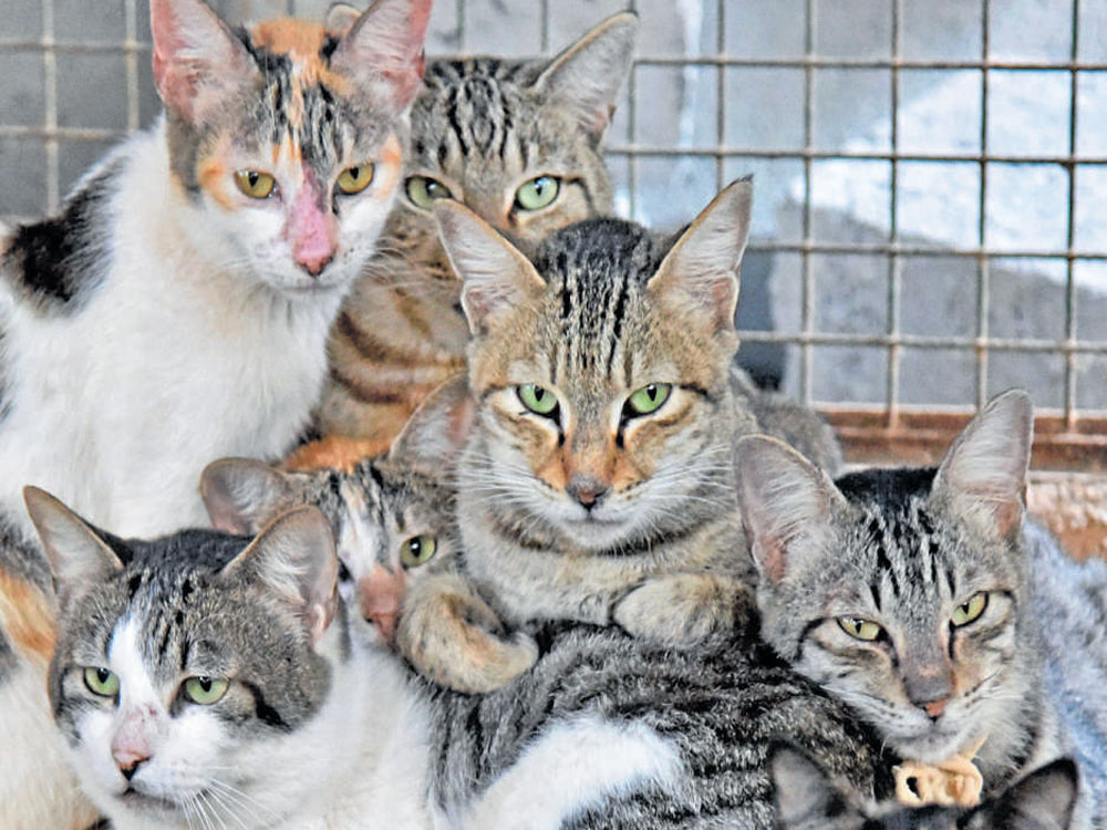 Stray cat a suspect in Japan attempted murder
