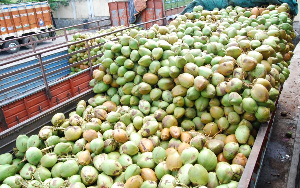 Maddur farmers' cash in as demand surges for tender coconut