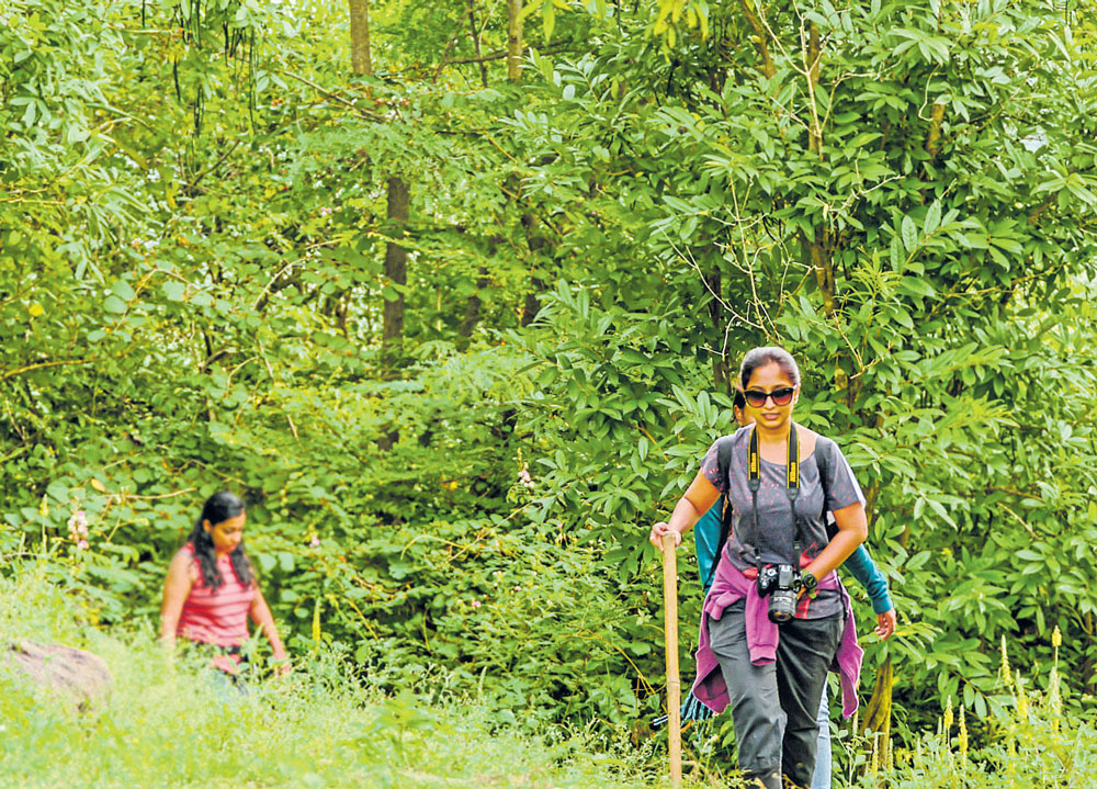 Trekking on popular eco-trails likely to get cheaper