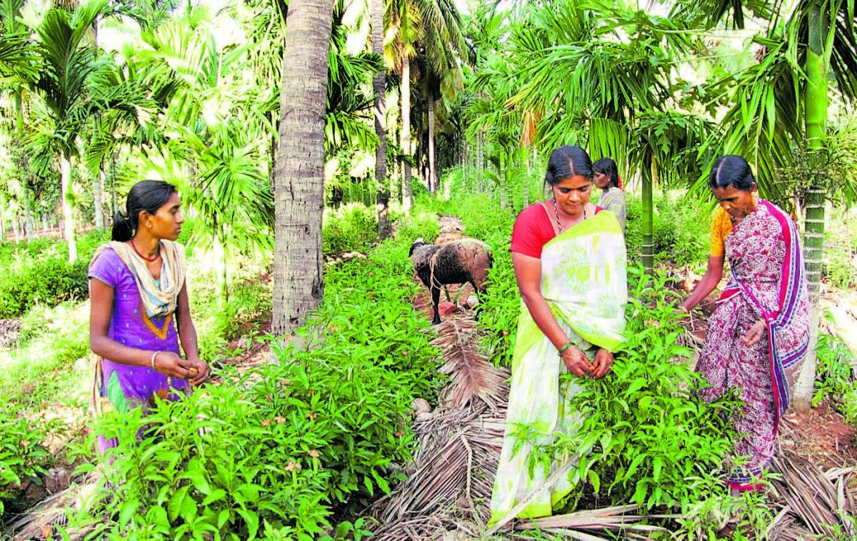 The passion for farming