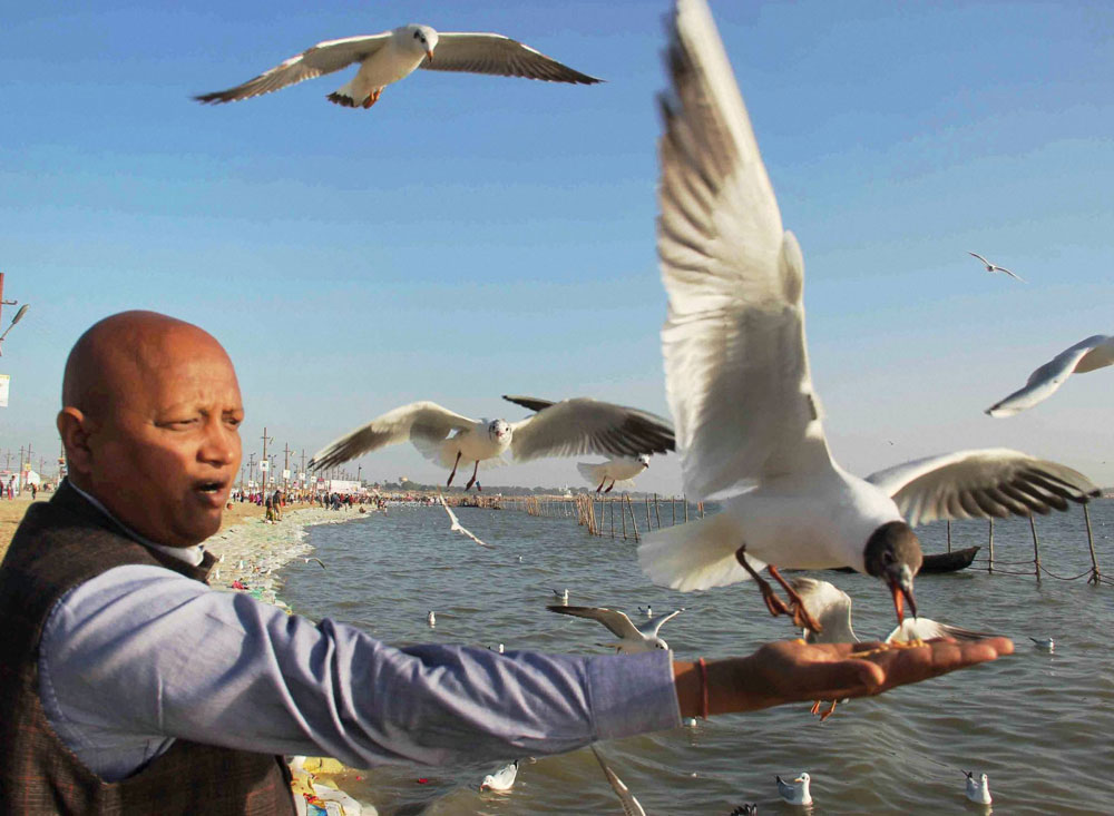 Not just people, smog affecting flight of migratory birds