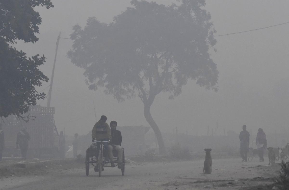 When toxic air chokes urban ecosystem