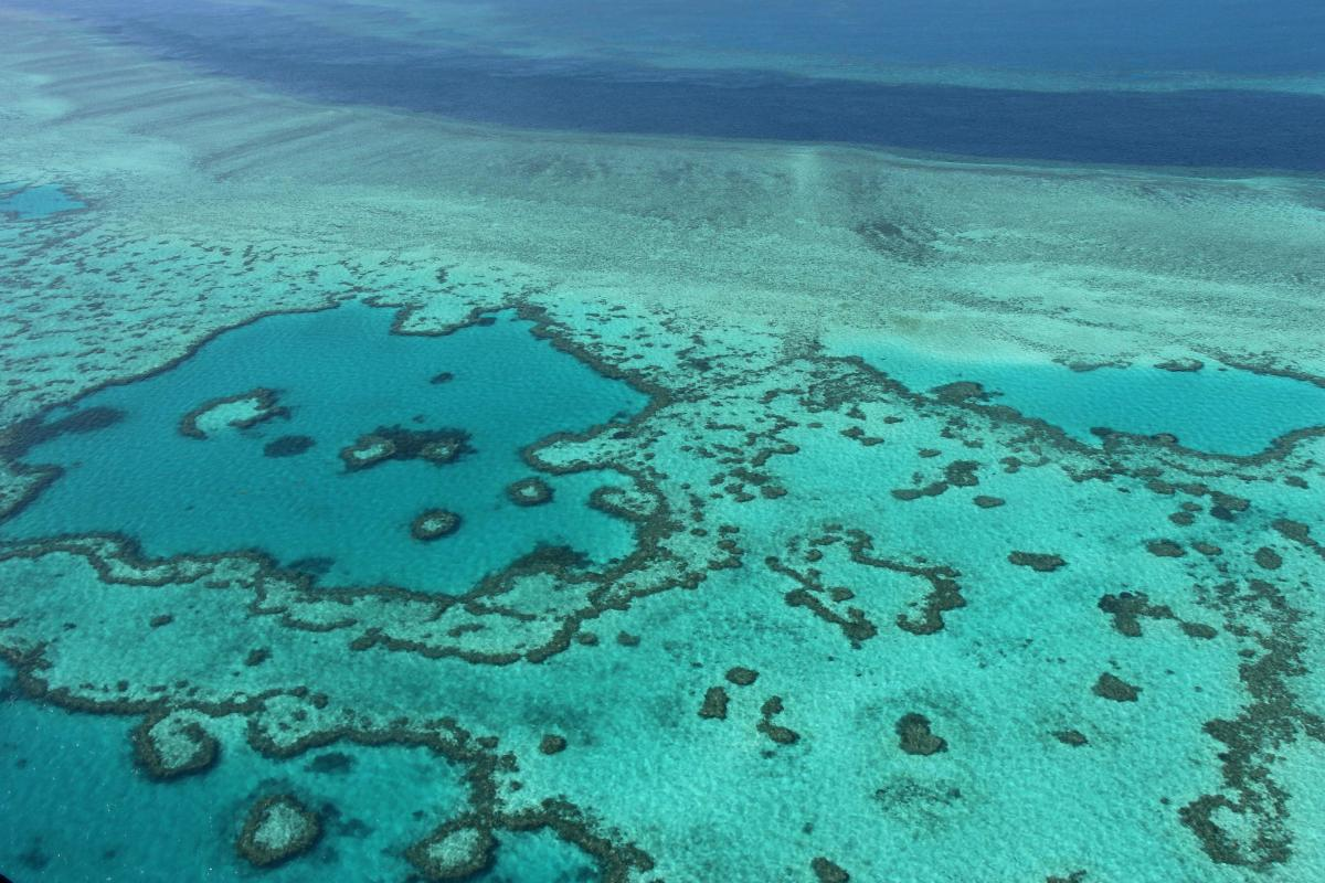 Coral transplant raises Barrier Reef survival hopes