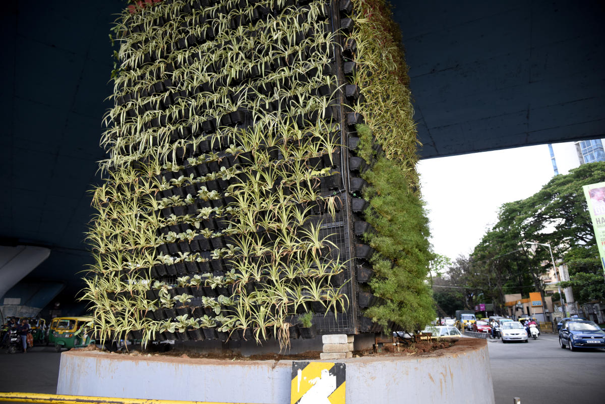 Vertical gardens dry up due to neglect