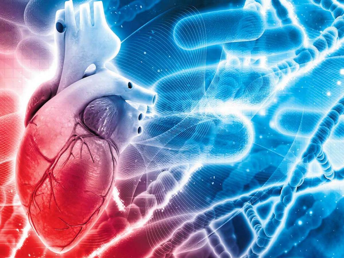 Injectable gel may help revive 'broken' hearts