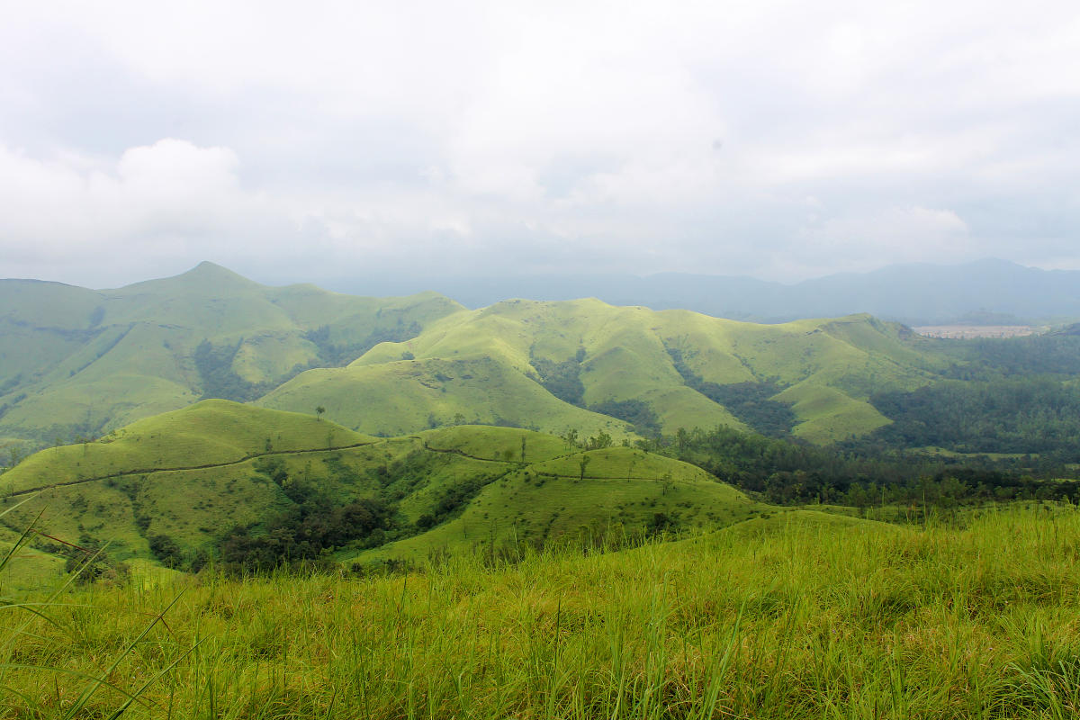 The impacts of social forestry on grasslands