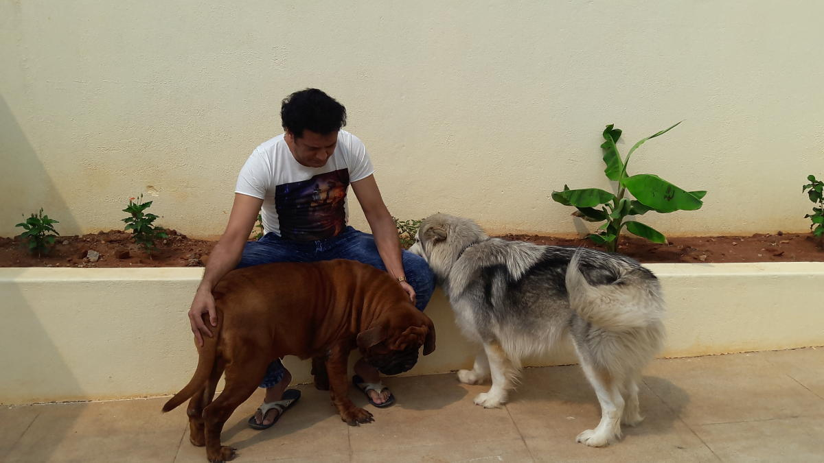 Bengaluru dog breeder takes pride in rare Korean mastiff