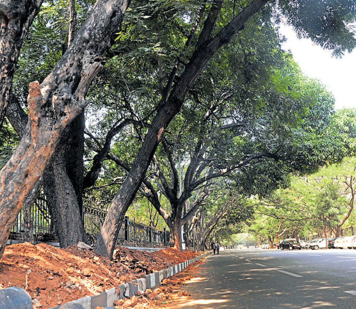 City hospital decides against felling to make space
