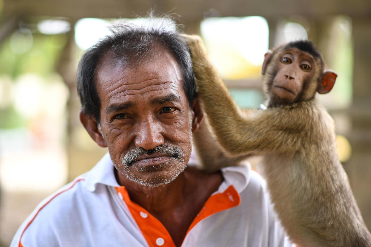Monkeys learn lessons at this Malaysian school