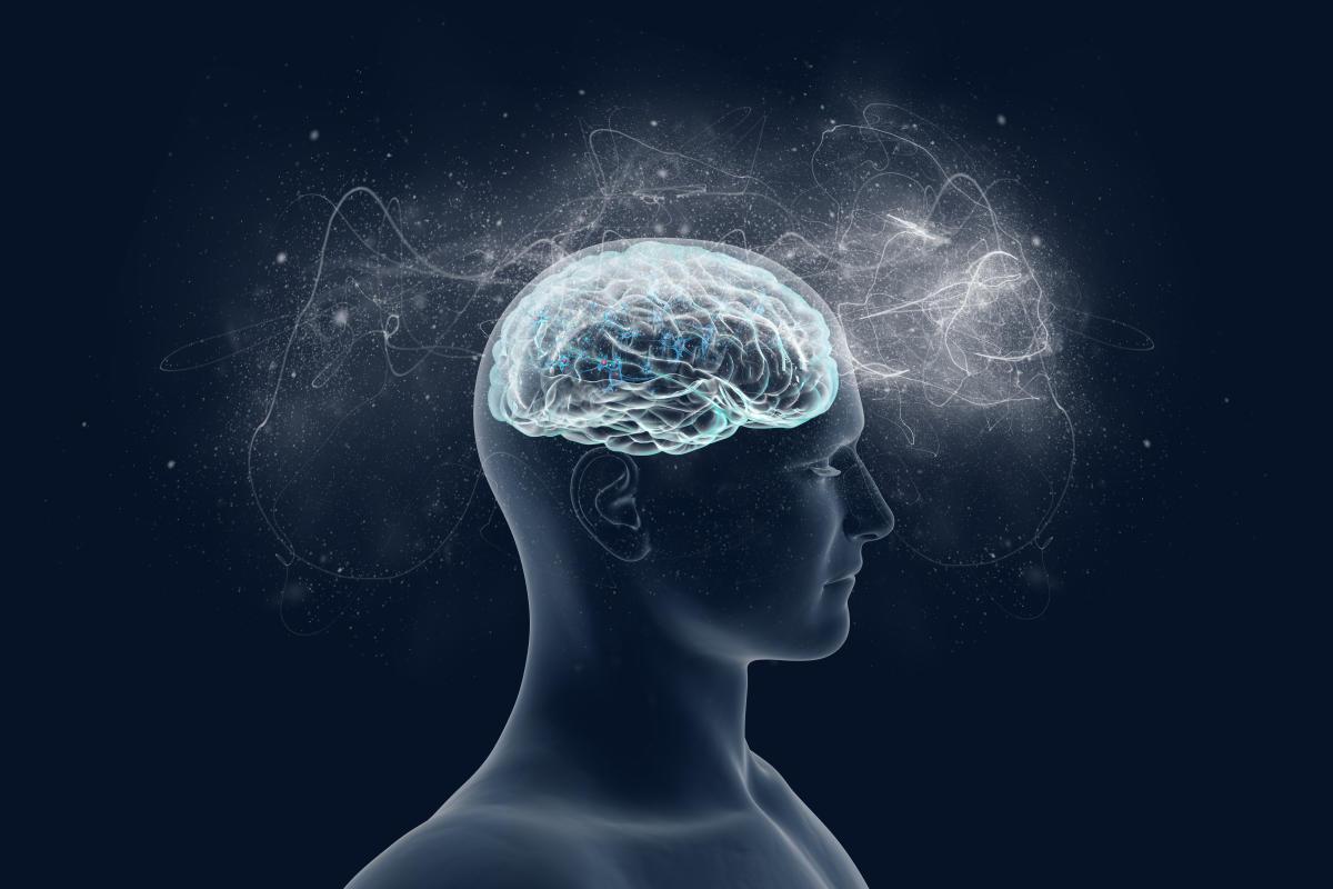 Visual stimuli induce gamma waves in our brain