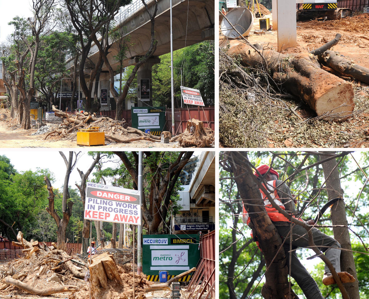 Trees to be axed in city's South zone to make way for metro line