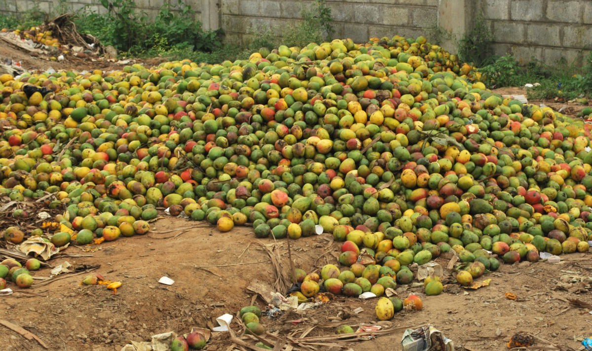 With no takers, mangoes rot in a corner at the APMC yard in Ramanagar. dh photo