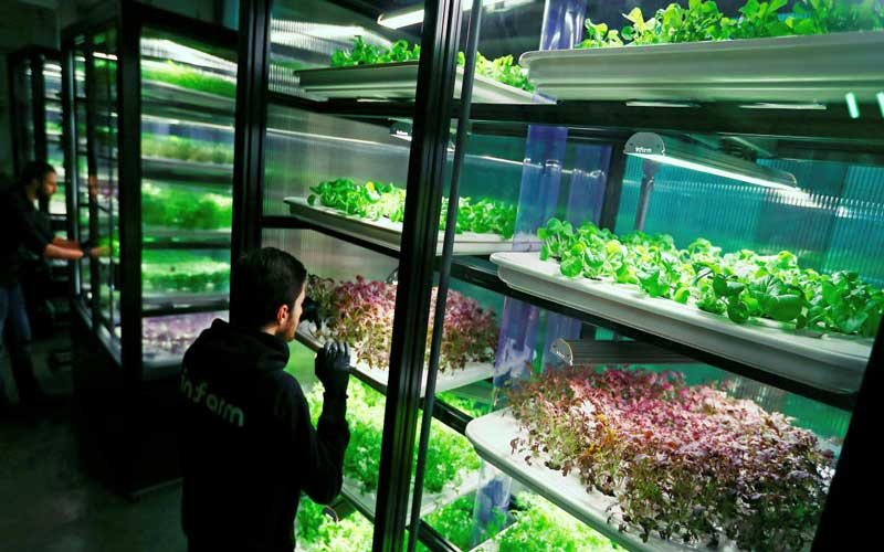 An employee of the urban farming start-up Infarm checks an indoor growing system at the company's showroom in Berlin, Germany. (Reuters File Photo)