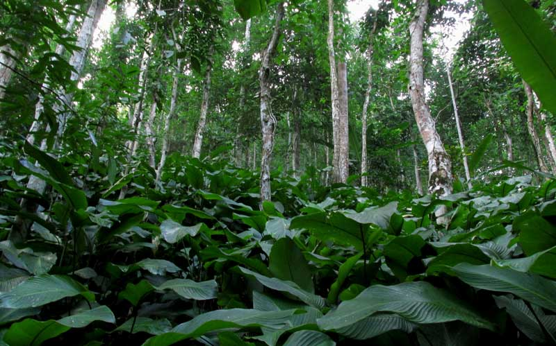 The results provide insights into the role of mixed agricultural–forest landscapes in the conservation of different facets of biodiversity.