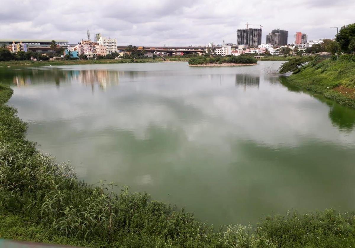 Discharge of sewage and dumping of garbage has turned Chokkasandra lake near Peenya, Bengaluru into a stinking mess.