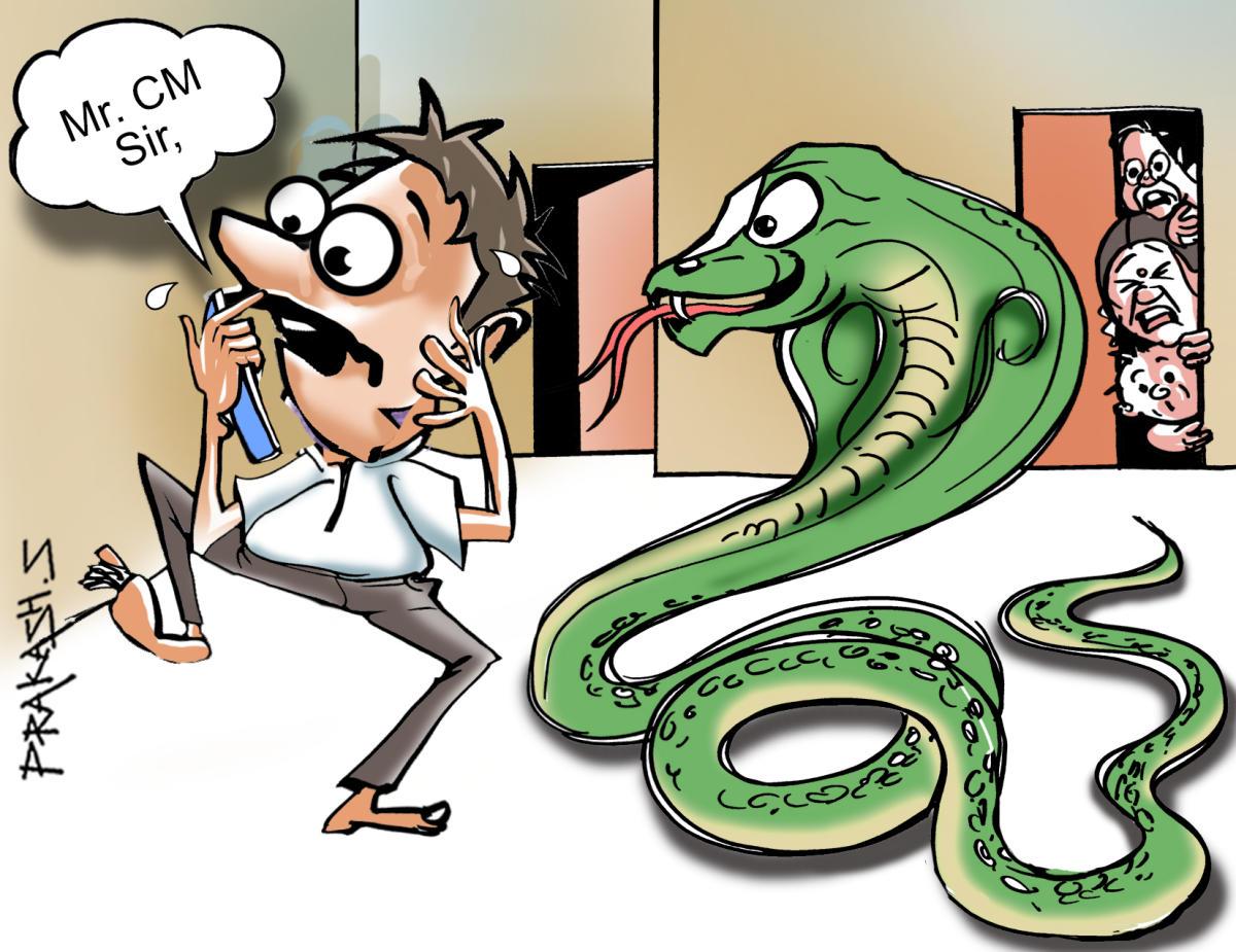 The man woke up to a big cobra slithering inside the house