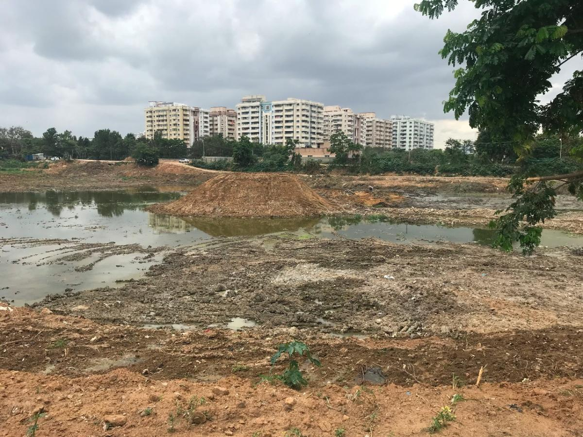 Iblur Lake was contaminated as sewage streamed into it because of the BBMP's faulty policies, according to a local activist.