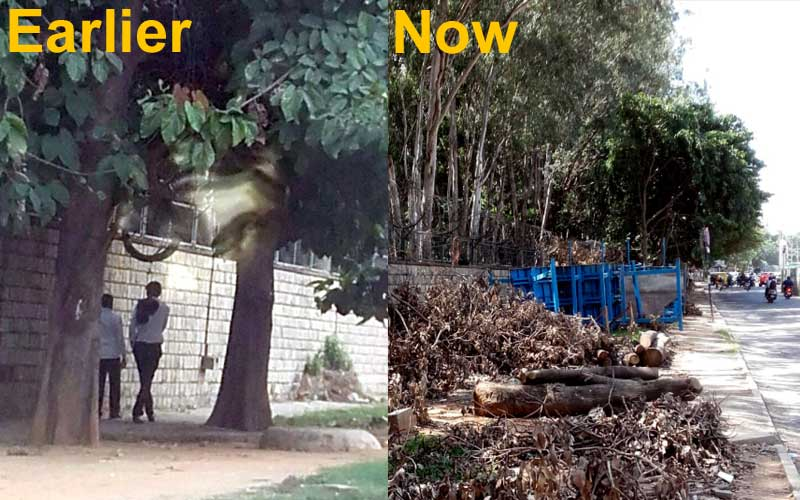 Three trees along the compound wall of Indian Institute of Management were cut down as the contractor thought they were the part of 44 trees that were to make way for a metro project.