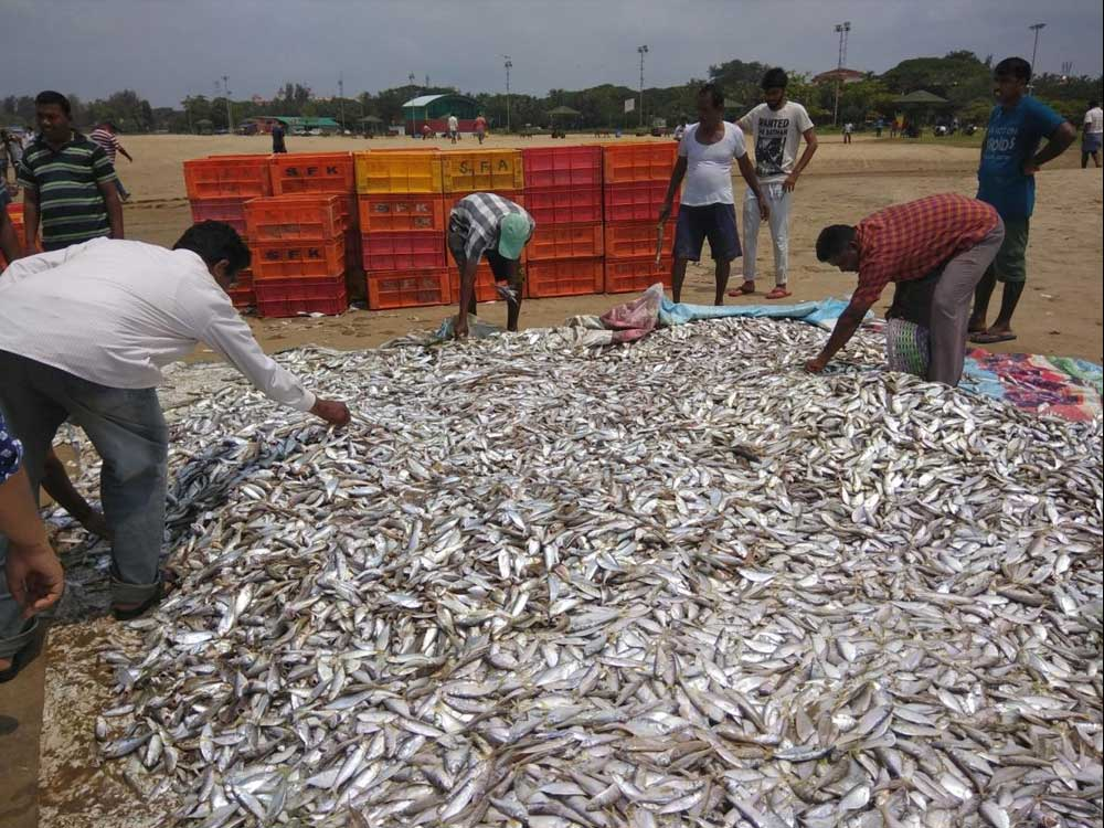 Committee president Manohar Boloor told reporters at Patrika Bhavan on Thursday that the fishermen were finding it difficult to eke out a livelihood due to the effects of the increase in diesel prices. (DH File Photo)