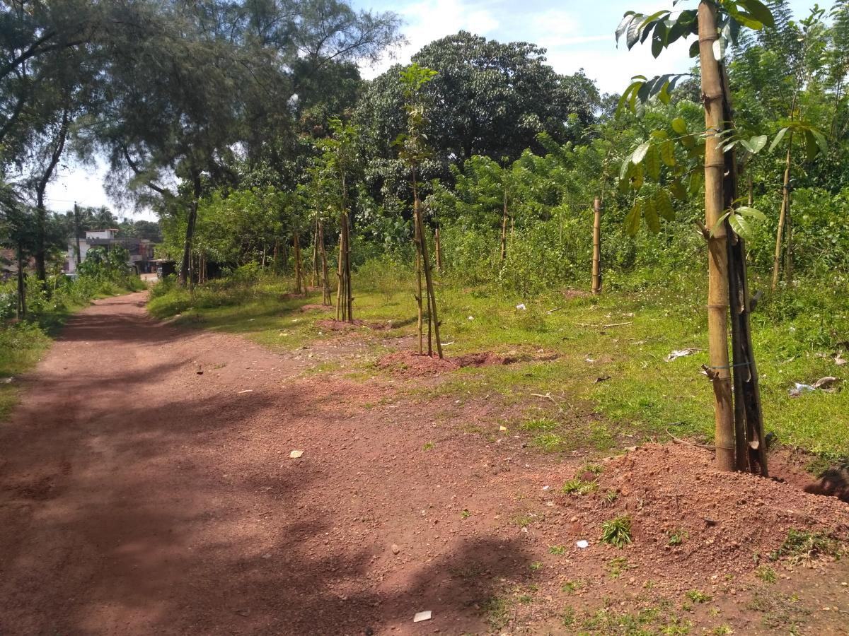 Saplings planted beside a road in Dakshina Kannada by the Social Forestry Department.