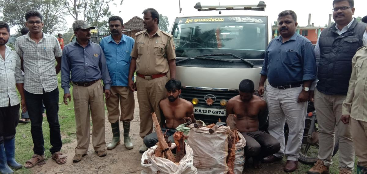 Forest Department personnel arrested two persons in connection with the illegal transportation of sandalwood.