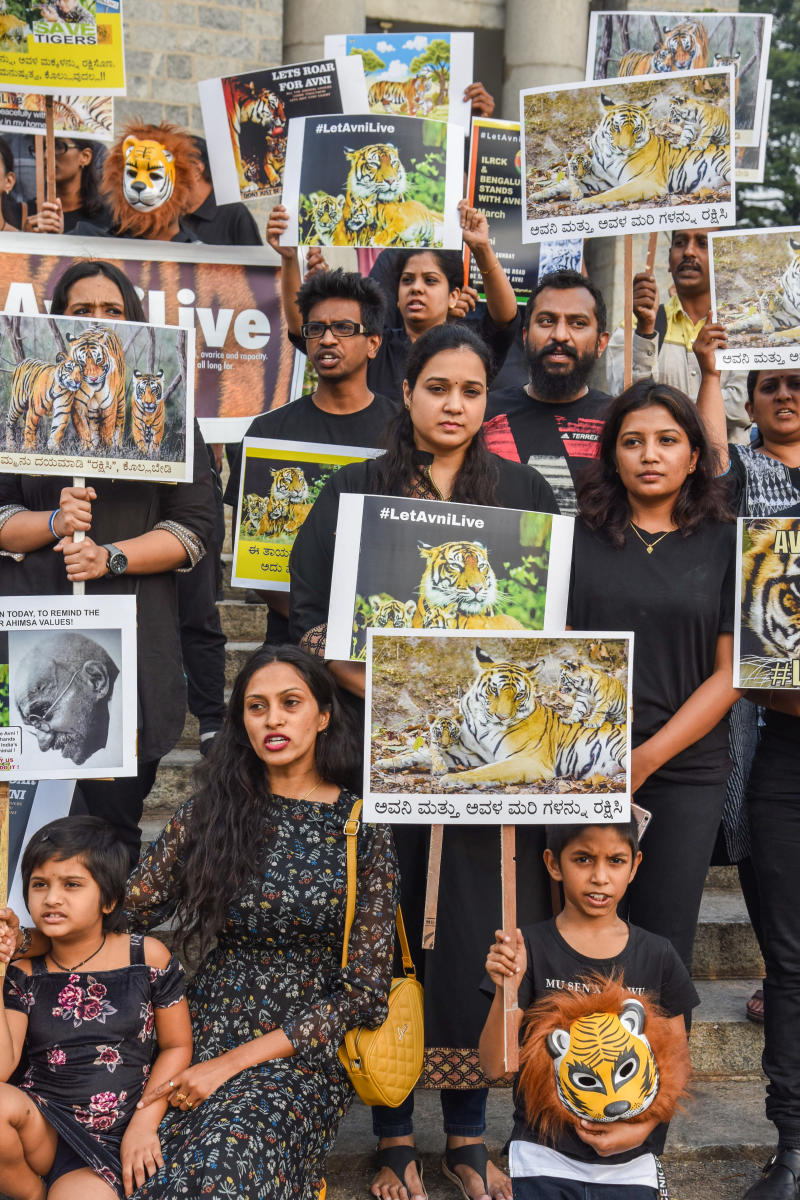 People protest at Town Hall on Sunday for saving the tigress, Avni. DH PHOTO/S K DINESH